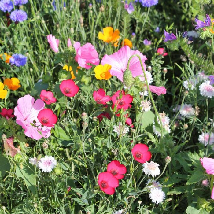 meadow of premium topsoil supplies traditional wildflower seed mixtures